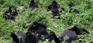 6 Days Gorilla Trekking