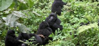 5 Days Rwanda Gorillas