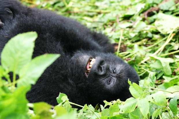 4 Days Rwanda Gorillas & Lake Kivu Safari