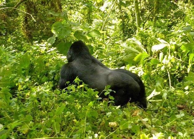 7 Days Rwanda Wildlife