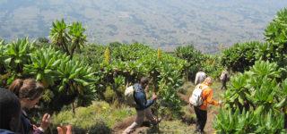 volcanoes park Rwanda