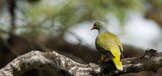 Birding in Bwindi Forest