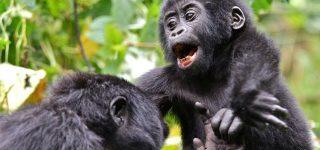 3 Days Bwindi Uganda Gorilla Safari