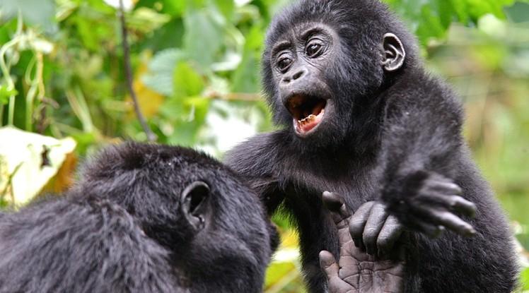 Gorilla Trekking Gears to Buy