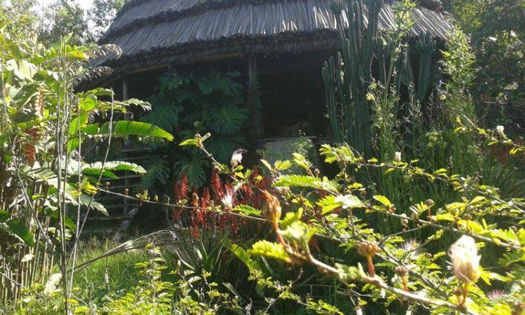 Cuckooland Tented Lodge