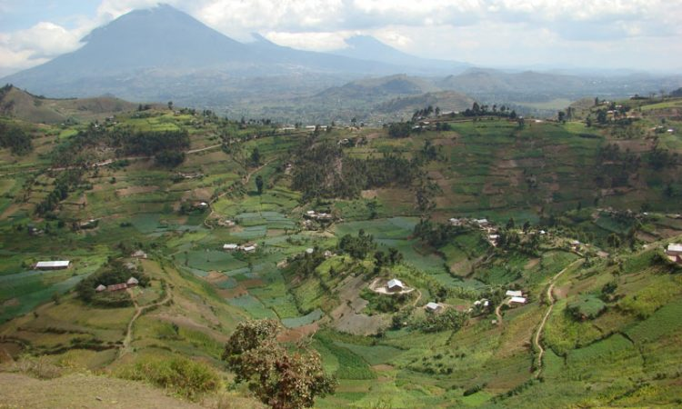 Ruhija Sector of Bwindi